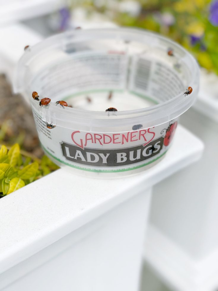 Ladybugs for Garden and Plants